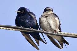how to make a purple martin house pole